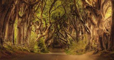 árboles que bordean un camino