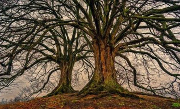 dos Árboles sin apenas hojas