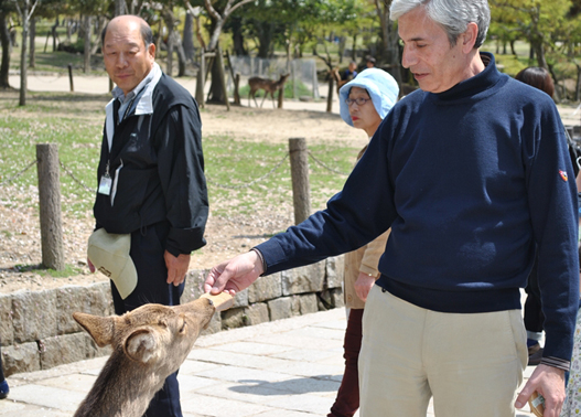 Hombre dando de comer a un ciervo en Nara, Japón