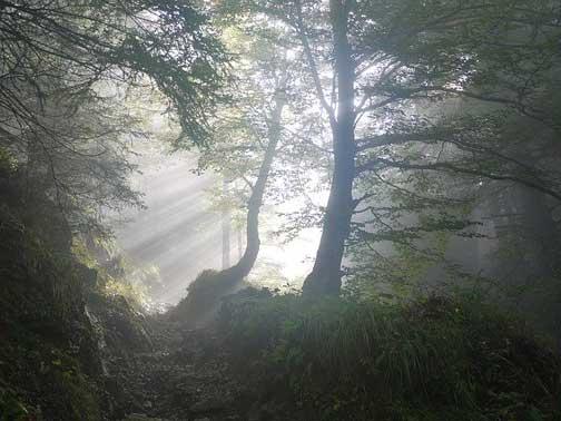 Bosque con niebla y un rayo de luz