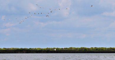 Pájaros emigrando