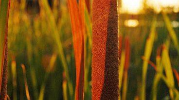 Vegetación con la luz del atardecer