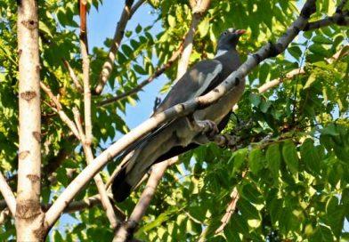 Paloma en un árbol