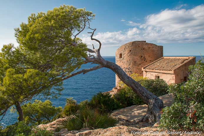 árbol caído en Mallorca frente al mar