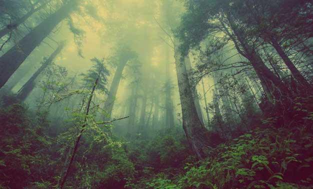 Los árboles hablan