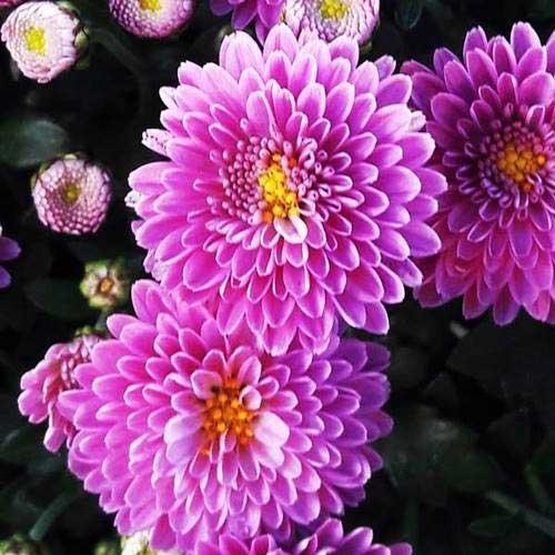 Ejemplo de fractal en una flor