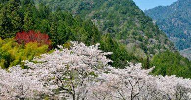 Montañas de Hakone
