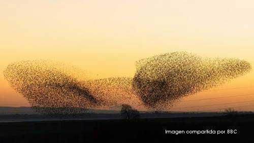 bandada de pájaros