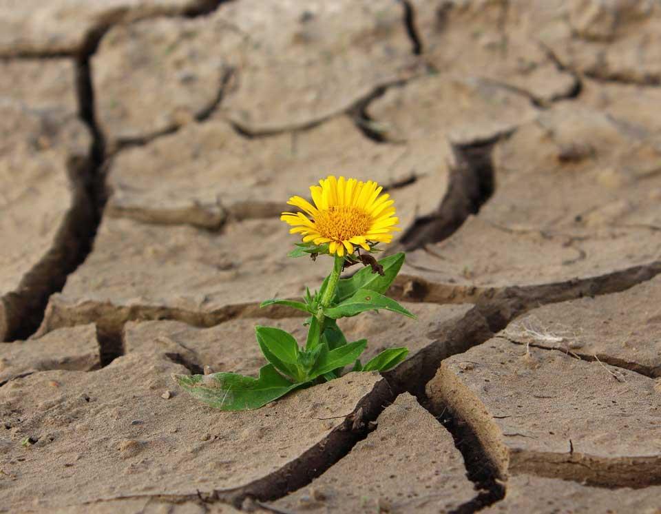Flor creciendo en el desierto