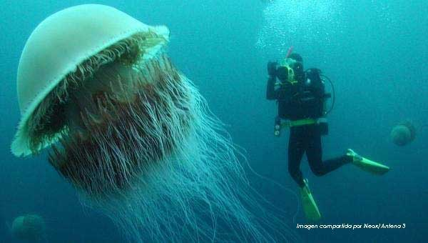 medusa con submarista