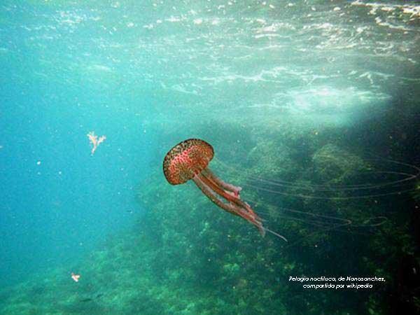 medusa para estudio