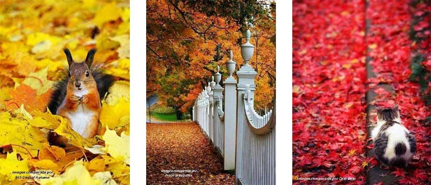 Tríptico con imágenes típicas de otoño como ardillas y hojas de colores