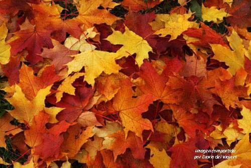 Hojas de otoño tiradas por el suelo