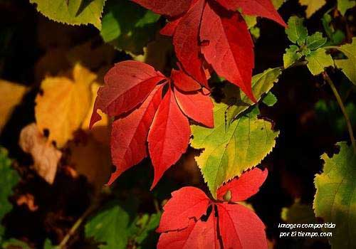 Hojas en otoño de diversos colores como rojo o amarillo