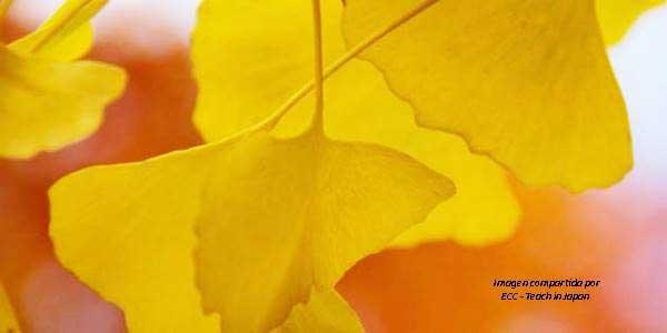 Hojas de color amarillo típicas de otoño