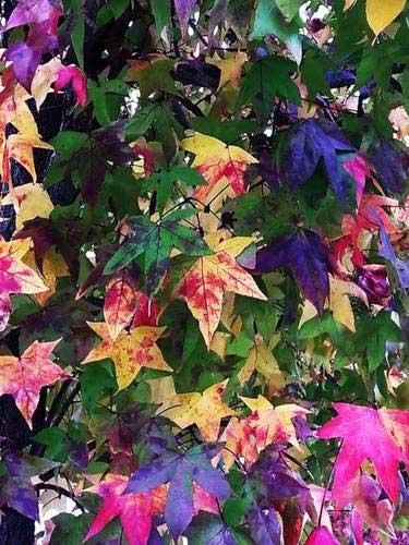 Fantasía de hojas en otoño de todo tipo de colores