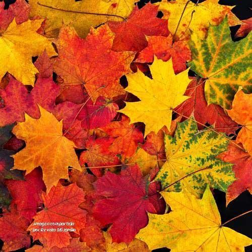 Hojas de otoño rojas, anaranjadas y amarillas