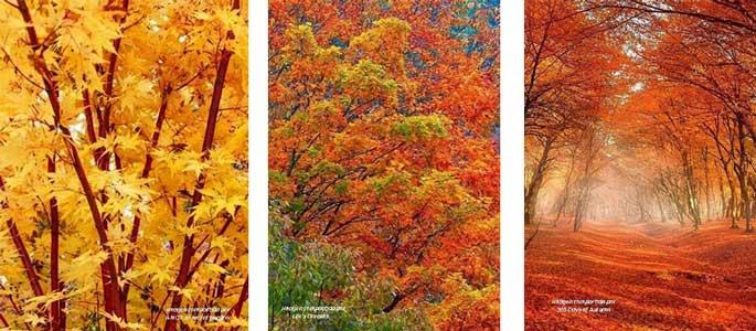Tríptico con las fotos de los diferentes follajes en otoño