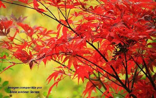 Hojas en un árbol del típico color rojizo del otoño