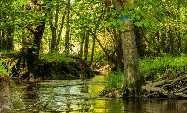 orilla río