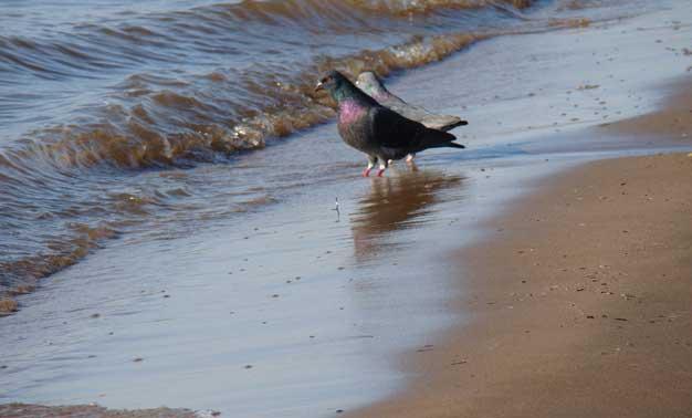 Palomas en la arena de una playa