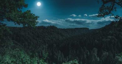 bosque al anochecer con luna llena