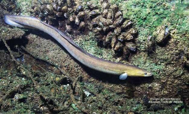 Una anguila