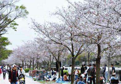Japón y la fiesta de la primavera