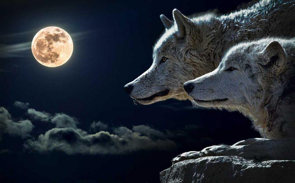 luna con lobos